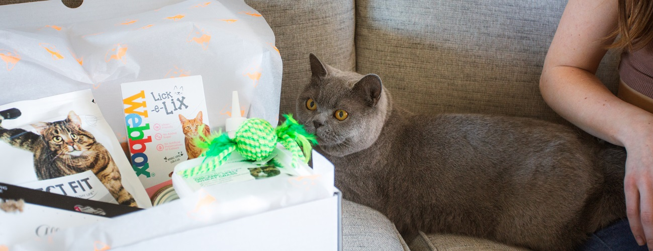 Saffie loves her One Happy Cat Gift Box
